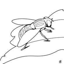 imagenes de moscas para dibujar