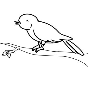 imagenes de pajaros canarios