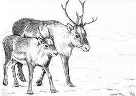 imagenes de renos navideños para colorear