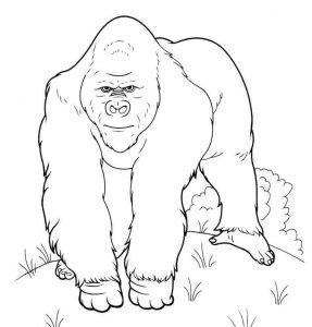 imagenes gorilas animados