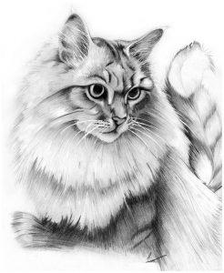 imagenes para iluminar de animales
