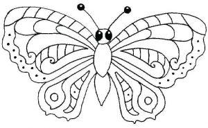 insectos en casa fotos