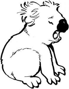koala animado