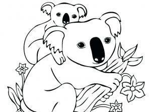 koala dibujo animado