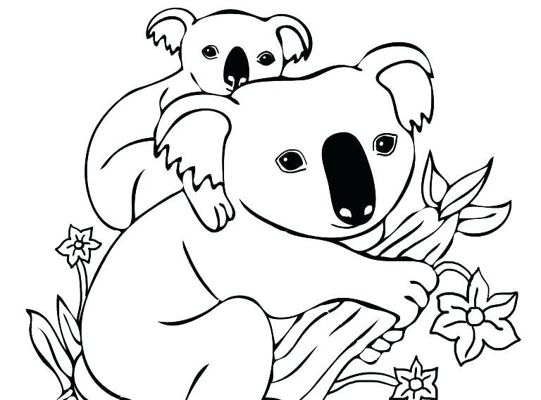ᐈ Dibujos De Koalasguiapinta Un Koala Con Nuestros Vídeos