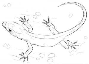 lagartija dibujo animado