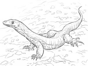 lagartija para dibujar