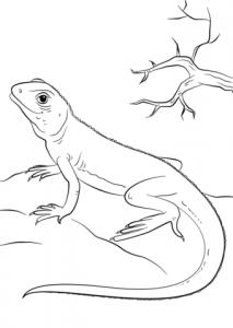 lagarto caricatura