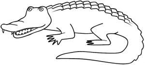 lagarto dibujo