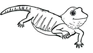lagarto para colorear