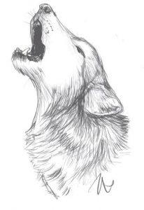 lobo dibujo