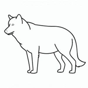 lobos a lapiz