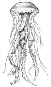 medusa en dibujo