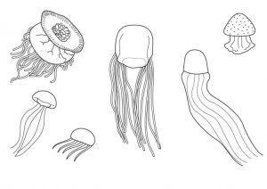 medusa para pintar
