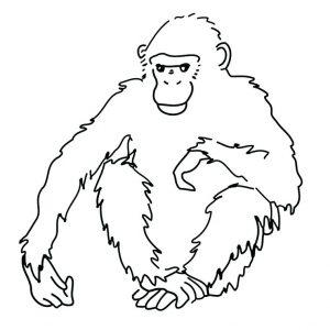 mico dibujo