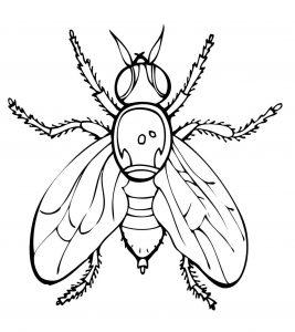 mosca de caricatura