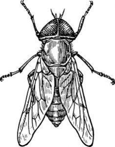 moscas fotos