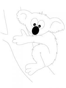 osos koalas fotos