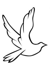 paloma paz dibujo