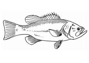 pez caricatura