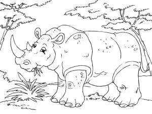 rinoceronte imagen