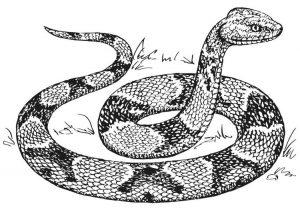 serpiente 3d