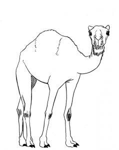 silueta de camello