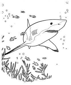 tiburon animado