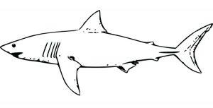 tiburon blanco animado