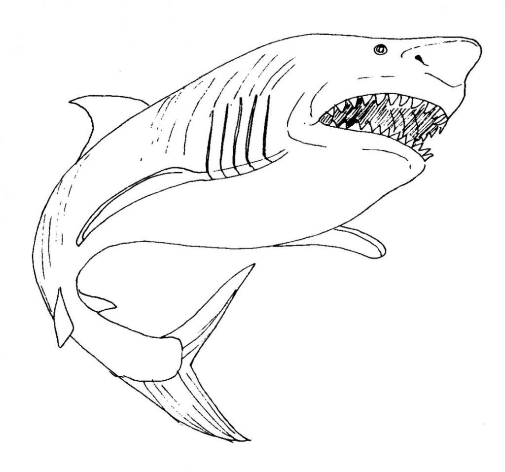 Dibujos De Tiburones Tutorial Un Bello Tiburón Para Colorear