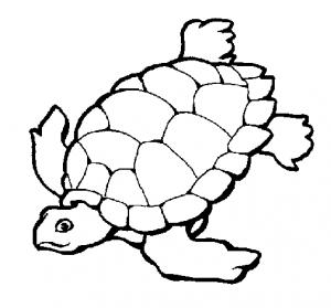 tortuga marina animada