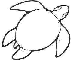tortuga marina dibujo