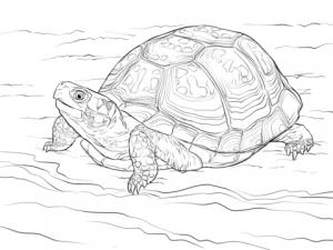 tortugas ninja dibujos animados