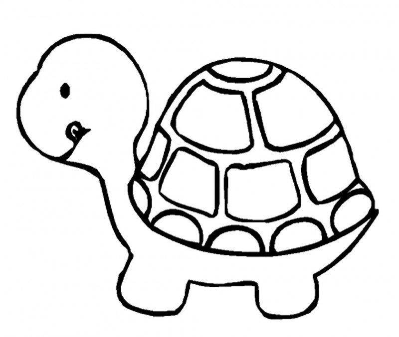 Dibujos De Tortugas Tutorial Colorea Una Bella Tortuga