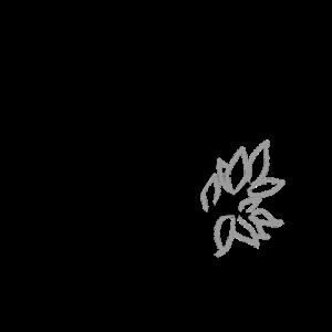 imagen de un loro para colorear