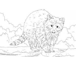 como dibujar un mapache facil