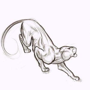 como dibujar una pantera negra