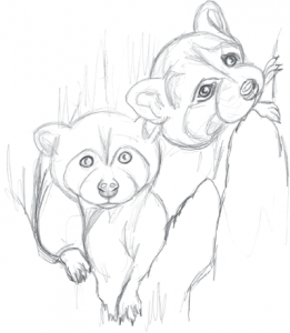 como se dibuja un mapache