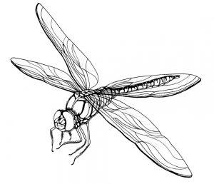 dibujos de libelulas animadas