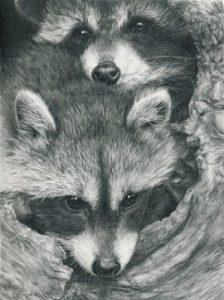 foto de mapache animal