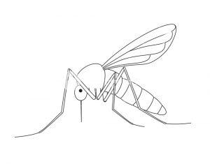 imagen mosquito