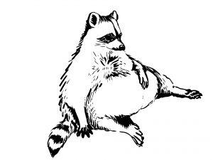 imagenes de mapaches en caricatura
