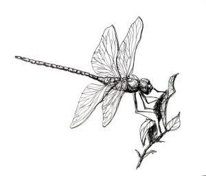 libelula vector