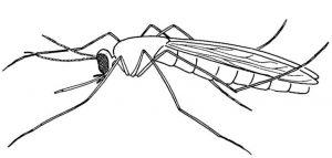 mosquito animado