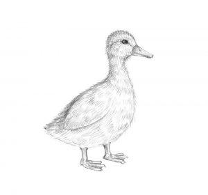 pato dibujo infantil