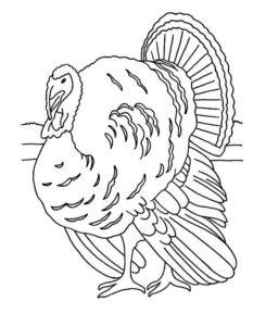 pavo real pintado