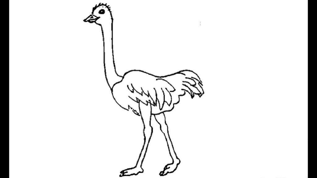 ᐈ Dibujos De Avestruzguiaimagines De Un Avestruz