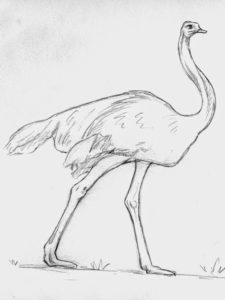 avestruz dibujo animado