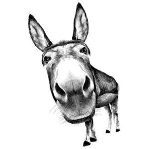 burro fotos