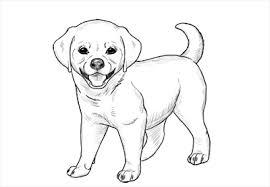 caricaturas de patrulla de cachorros en español